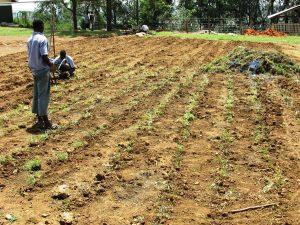 lchgrassplanting
